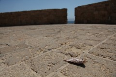 Fish out of water: A dead fish lies an impressive distance from the water on the old stone boardwalk in the ancient city of Acre on Israel's north coast. (2010)
